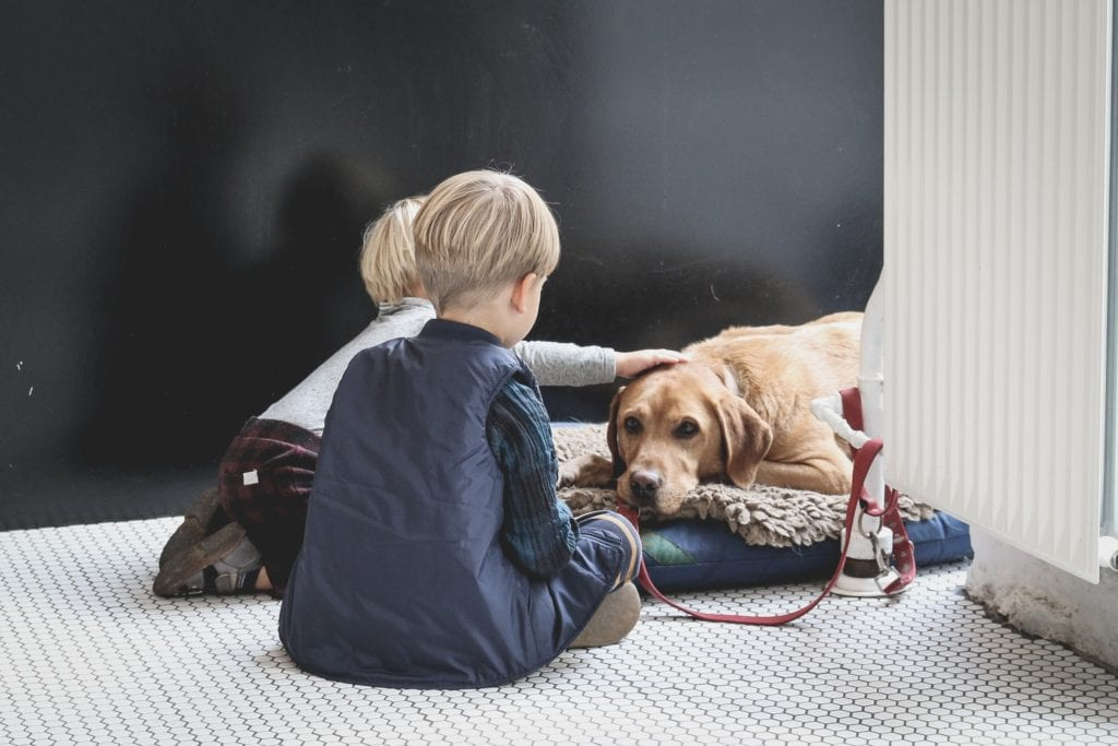 Kids and Dogs: Positive reinforcement